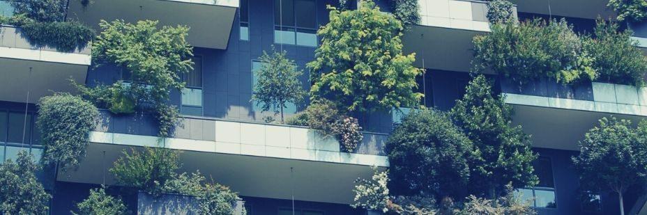 Vegetation, Plant, Bush