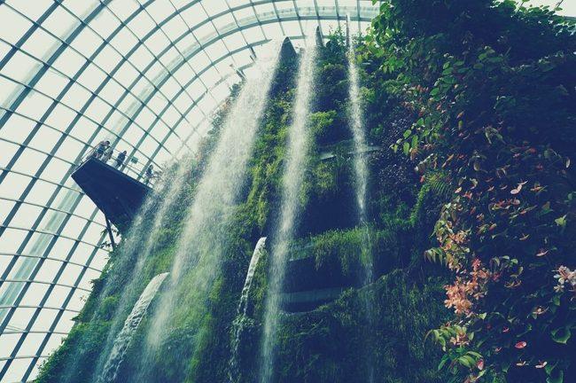 Vegetation, Plant, Rainforest