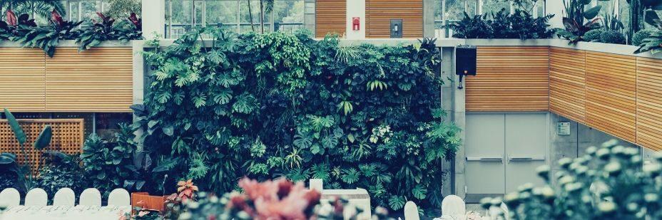 Bush, Plant, Vegetation